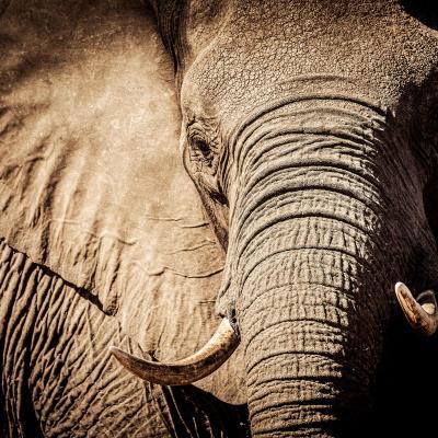 Elephant articulates lorry